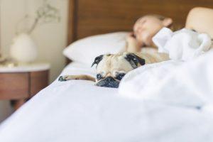 Dame og hund sover i hvid seng